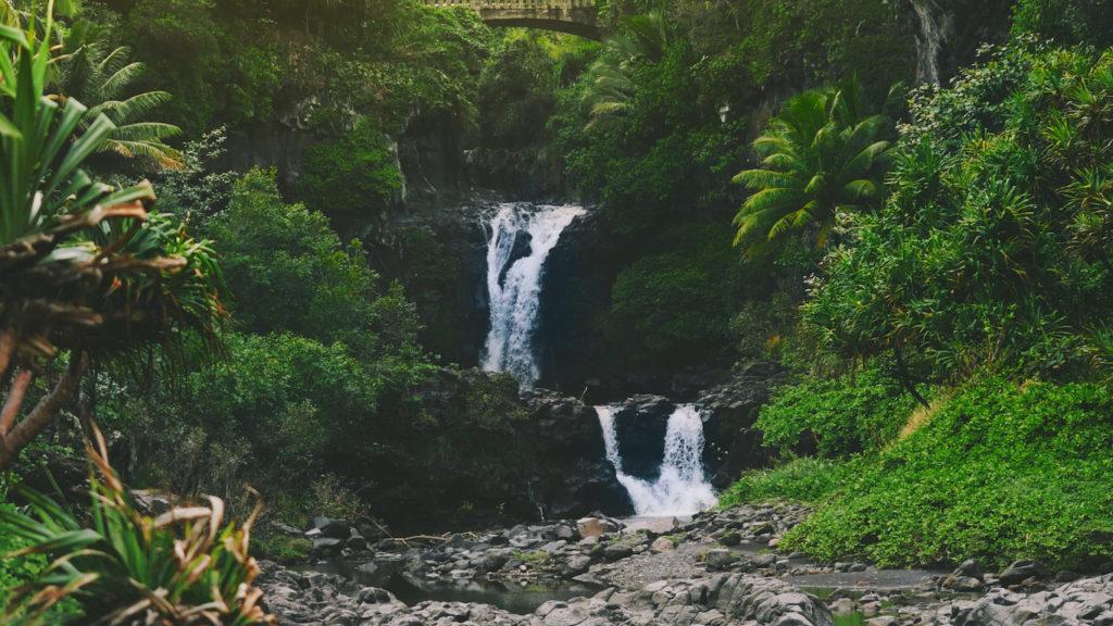 Regenwald von Hawaii