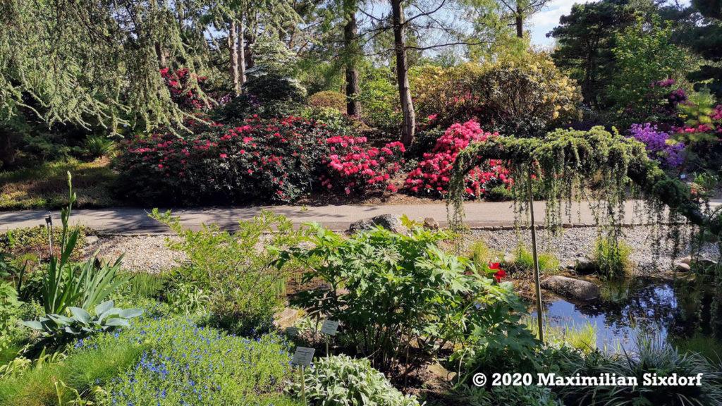 Der chinesische Teil im Loki-Schmidt-Garten